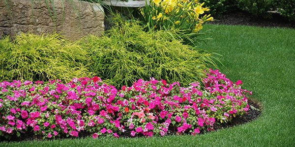 maintained garden bed
