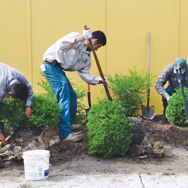 crew-planting-services